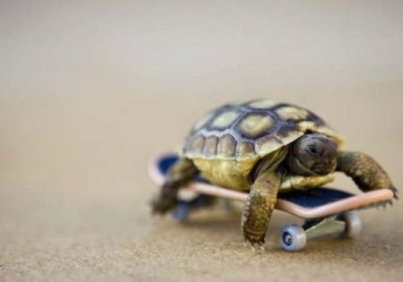 Turtle on a skateboard