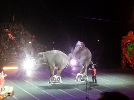 Elephants on a stool