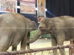 Elephants playing during the preshow.
